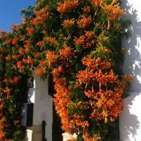¡APARTAMENTO CON JARDÍN JUNTO AL MAR!, hotel in zona Aeroporto di Almeria - LEI, Almería