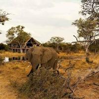 South Okavango | Omogolo Bush Lodges, hotel in Rammu