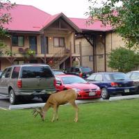 Aspen Village, hotel em Waterton Park