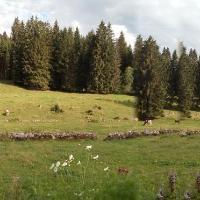 La Dernier (La cote-aux-fées) Suisse