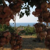 Agriturismo Pagliuzzo, hotell i Ustica