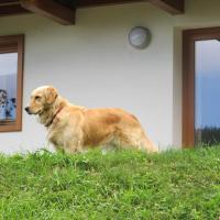 Il Cardo Trentino, hotel a Bedollo