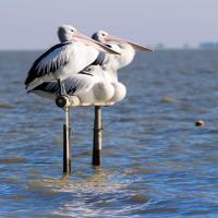 Pelican Perch Retreat, hotel in Meningie