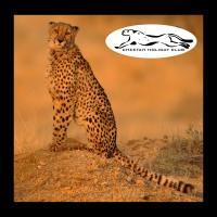 Cheetah Holiday Club, hotel v destinaci Vizovice