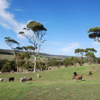 Lisieux Farm Bed and Breakfast, hotel em Victor Harbor