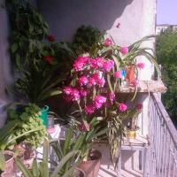 Бабушкин уют в РУСТАВИ, hotel in Rustavi