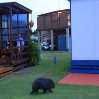 BIG4 Kelso Sands Holiday & Native Wildlife Park, hotel em Kelso