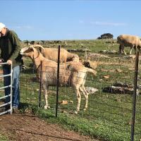 Gilgraves Vineyard Farmstay