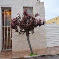 Vía Lavalle Suites 1, hotel in San Luis