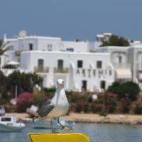Artemis Hotel, hotel in Antiparos