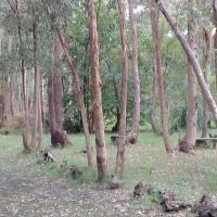 El portal Del Bosque