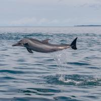 Dolphin Quest Costa Rica, hotel en Piedras Blancas