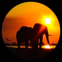 Elephant Trail Guesthouse and Backpackers, hotel in Kasane