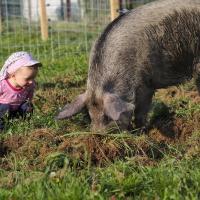 Bio-Bauernhof Wilfling