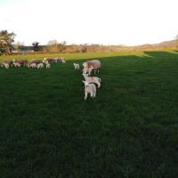 Conwy Pen Cefn Farm Holiday