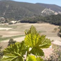 Eco gîte dans les vignes