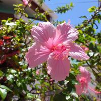 Pension Hibiscus