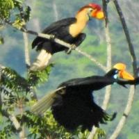 Tangkoko Birds&WildLife Animals Tour