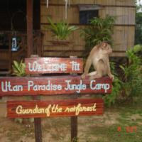 Utan Paradise jungle camp (Back Packers Camp)