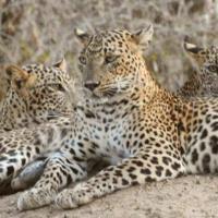 Leopard Spotting Camp - Yala, hotel in Yala