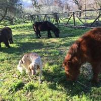 Agriturismo Eden, hotel a Sant'Agata de' Goti