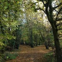 Sweetings Wood Glamping