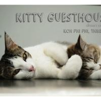 Kitty Guesthouse, Hotel in Ko Phi Phi