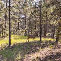 Wooded Retreat with Deck 4 Mi to Downtown Flagstaff!
