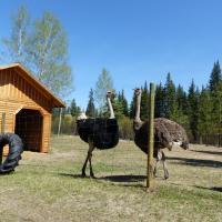 Ostrich Feather B&B, hótel í Lone Butte