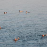 NEVE ZOHAR DEAD SEA, hotel in Neve Zohar