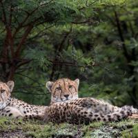Cheetah Ridge Lodge, hotel in Nambiti Private Game Reserve