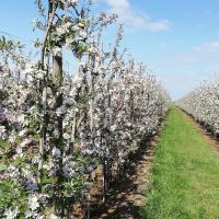 Ferienhaus Apfelblüte
