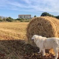 Agriturismo La Palascìa Masseria Agreste