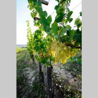 Cascina Olivetta -sleep in winery