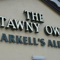 The Tawny Owl