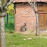 Chambres d'hôtes du ranch, hôtel à Les Essarts-Varimpré
