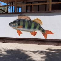 Fish Sense