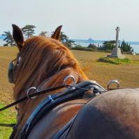 Chez Jollyjune Ferme Equestre des Courlis située à 47kms du Mont Saint-Michel 12 kilomètres par les airs