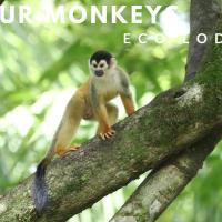 Four Monkeys Eco Lodge, hotel en Cabo Matapalo