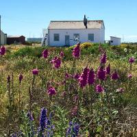 Charming original fishermans cottage on Dungeness beach