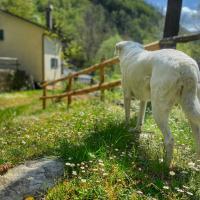 Villa indipendente con bosco, giardino e ruscello privati, hotel in Borzonasca