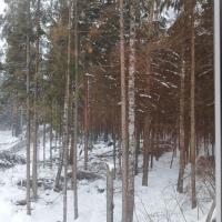 House in the woods, отель в городе Anashkino