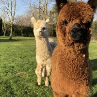 Alpaca Lodge