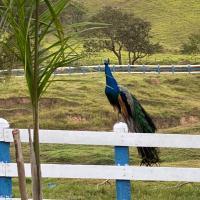 Fazenda Seresta, o sonho em turismo rural.