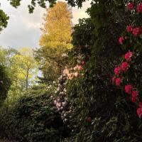 Surrey Hills Cottage