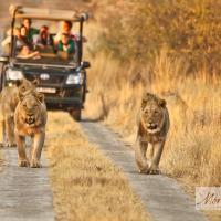 Morokolo Safari Lodges, hotel in Pilanesberg