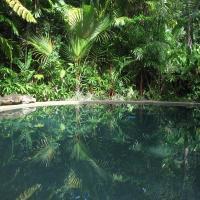 Daintree Rainforest Retreat Motel, hotel in Cape Tribulation