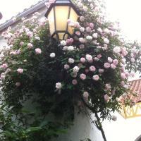 Patio das Flores, hotel in Ferreira do Alentejo