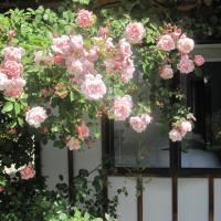 Rose Cottage at The Elms