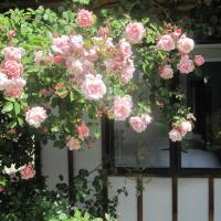 Rose Cottage at The Elms, hotel near Christchurch International Airport - CHC, Christchurch